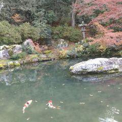 青蓮院庭園用戶圖片