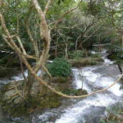 Water Forest User Photo