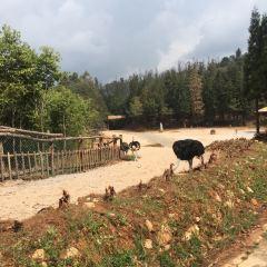 Yunnan Zoo User Photo