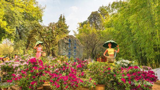 Enjoying Flowers in Heilongtan Park