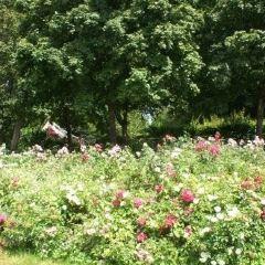 Parc Monceau User Photo
