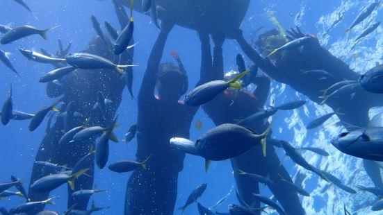 東山島出海浮潛體驗