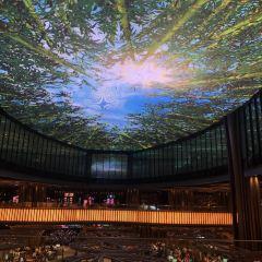 雲頂雲星劇場用戶圖片