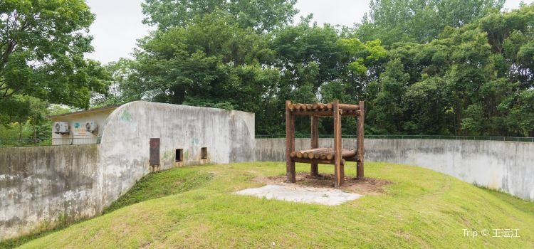 合肥野生動物園1