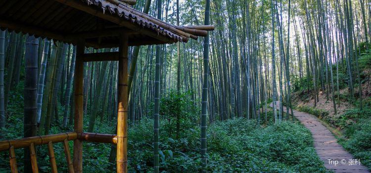 "Shunan Zhuhai (""South Sichuan Bamboo Sea"") National Park3"