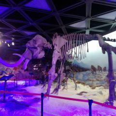恐龍博物館用戶圖片