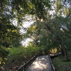 大島植物園用戶圖片