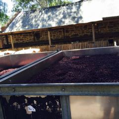 奔富葡萄酒莊用戶圖片