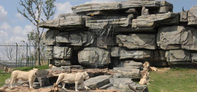 南通森林野生動物園3