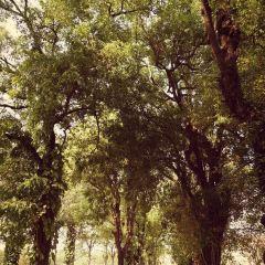Siem Reap Park User Photo