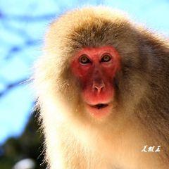 Mutsu City Wakinozawa Wild Monkeys Park User Photo