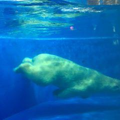 Harbin Polar Museum User Photo