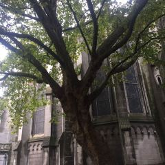 里爾大教堂用戶圖片