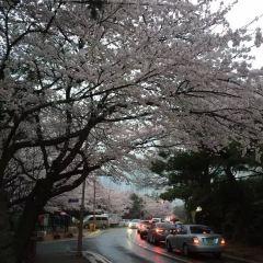 Dalmachi User Photo
