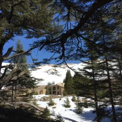 The Cedars of God User Photo