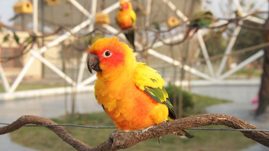 太陽錐尾鸚鵡展區