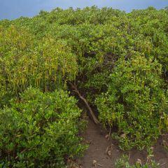 淡水河紅樹林自然保留區用戶圖片