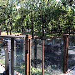 Xiang Ai User Photo