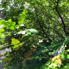 나베칸무리야마 공원 여행 사진