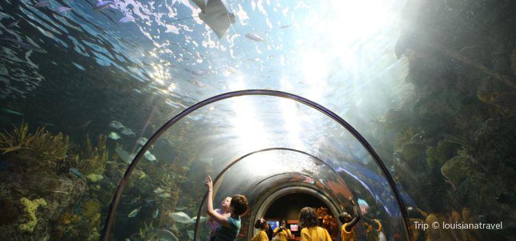Audubon Aquarium of the Americas1