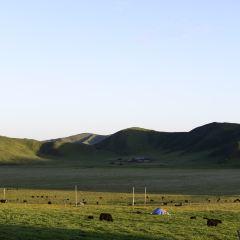 紅原大草原用戶圖片