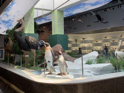 Qinhuangdao Bird Museum
