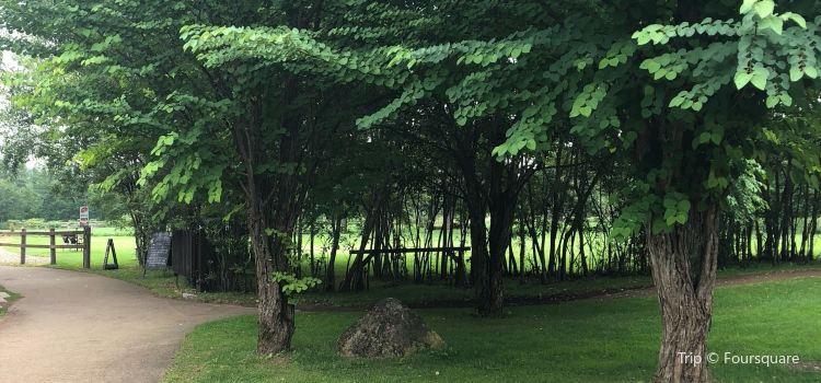 Tokachi Millennium Forest3