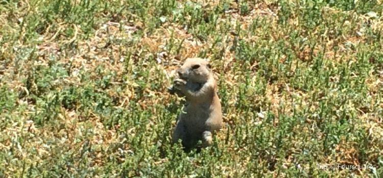 Prairie Dog Town1