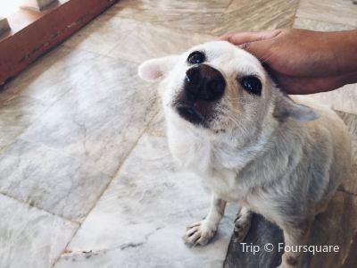 Aklan Animal Rescue & Rehabilitation Center