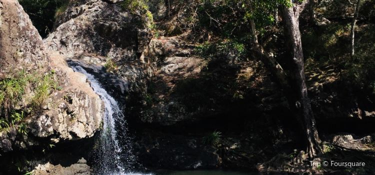 Kondalilla Falls2