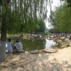 Eucommia Ulmoides Oliv Park (Northeast Gate) User Photo