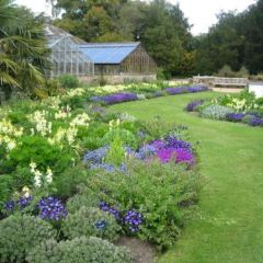 劍橋大學植物園用戶圖片
