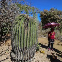 Ethnobotanical Garden User Photo