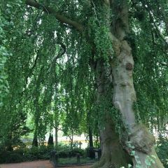Assistens Cemetery User Photo