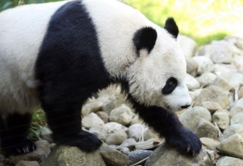 愛丁堡動物園