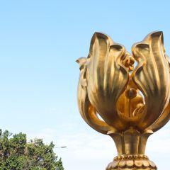 金紫荊廣場用戶圖片