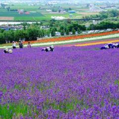 Kaze-no Garden,Prince Grand Resort Furano User Photo