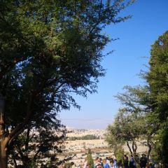 聖殿山用戶圖片