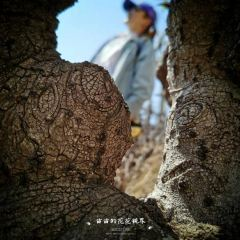 Longchi Academy User Photo