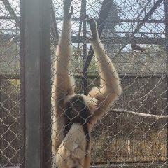 吴哥生物多样性保护中心用戶圖片