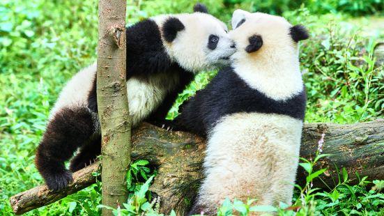 碧峰峽熊貓基地