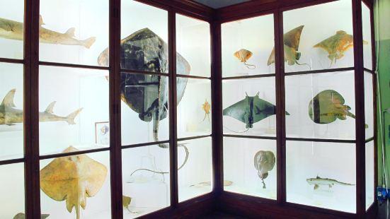 Museo Zoologico La Specola