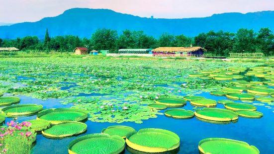 아미산 성지 연꽃 생태계곡