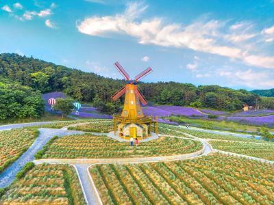 곡리 라벤다공원