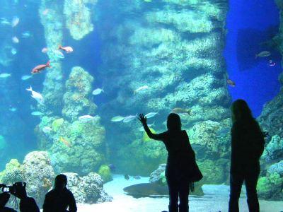 丹佛市區水族館