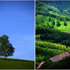 싸이한바국가삼림공원 여행 사진