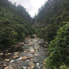 Akatarawa Forest User Photo
