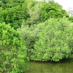 Brunei River User Photo