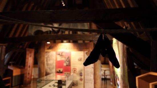 盧森堡國家自然歷史博物館