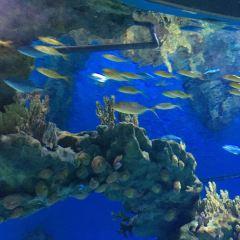 우한(무한) 해창극지해양세계(하이창지디하이양스제) 여행 사진